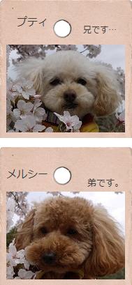 ぷてぃ&めるしー日記